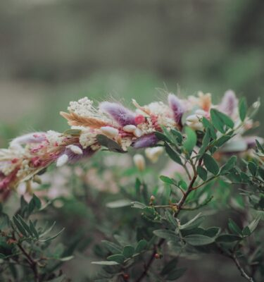 tiara flores